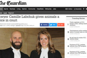 Lawyers give animals a voice in court